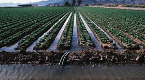 surface irrigation system