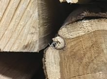 hardwood vs softwood img