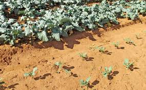 Best Vegetables for Sandy Soil